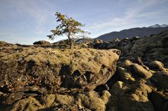 Media Gallery | Nisga'a Lisims Government Nisga'a Memorial Lava Bed Park Canada's last volcanic eruption occured on Nisga'a land approximately 263 years ago. The lava destroyed everything in its path, and covered two Nisga'a villages.