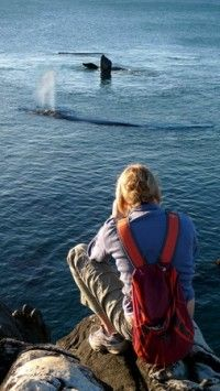 You can almost touch the whales - De Kelders Relaxing Things To Do, Whales, South Africa, African, Touch, Travel, Baleen Whales, Viajes, Whale