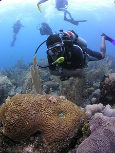 Scuba diving in Cocoview Roatan, Honduras .. This is the exact place I will be!!!