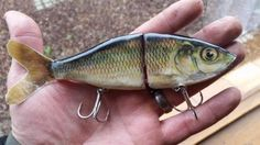 Homemade Fishing Lure Blog: Test Tank Tuesday: Carpe Diem (seize the carp)