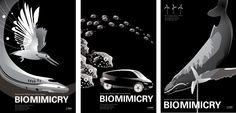 Biomimicry Exhibition Posters - Irina Braginsky