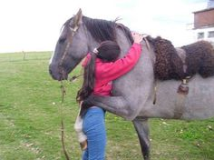 PetsLady's Pick: Cute Horse Hug Pic Of The Day  ... see more at PetsLady.com ... The FUN site for Animal Lovers