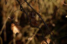 brąz zimowy czyli w sepii 2