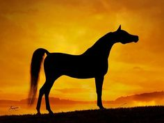 Arabian sunset silhouette