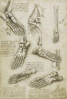 Leonardo da Vinci - Dibujos de anatomía humana: Los huesos del pie y del hombro, h. 1510 Da Vinci Sketches, Da Vinci Drawings, Foot Anatomy, Anatomy Drawing, Human Anatomy, Skeleton Bones, Figure Drawing Reference, Anatomy Reference, Human Figure Drawing