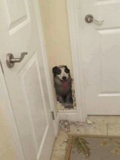 You were gonna install a doggie door there anyway tho right???