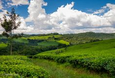 Diversity dominates Uganda in both breathtaking landscapes and wildlife, making this country my biggest surprise in Africa yet.