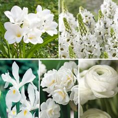 WICKEDLY WHITE COLLECTION - Garden Express