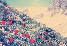Tunceli-munzur dağları