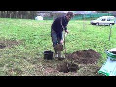 Como Plantar Un Manzano