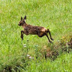 Rehkitz. Kann schon ganz schön springen 😊👍 #naturephotography #kitz Horst, Austria, Kangaroo, Instagram, Animals, Cute Baby Animals, Deer, Animales, Nice Asses