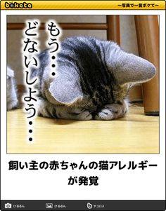 飼い主の赤ちゃんの猫アレルギーが発覚 / 猫好きなのに猫アレルギーって人, 結構いますよね…小麦アレルギーで大好きなケーキもラーメンも食えない辛さと一緒…(´Д` ;)