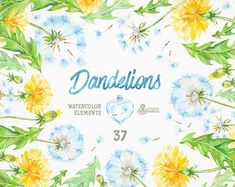 This set of 37 high quality hand painted watercolor Elements. Perfect graphic for wedding invitations, greeting cards, photos, posters, quotes and