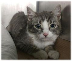 AQUA - A1064508 - - Manhattan Please Share: ***TO BE DESTROYED 02/10/16*** Most kittens AQUA'S age are scampering around and lovin' life! But not this 4 month old. No,he's in a cold and scary shelter wondering weather he will live to see tomorrow! He was allowing some petting but was fearful and will do best in a home with EXPERIENCE and NO children! PLEASE give baby AQUA a chance. He's sure to be grateful for the rest of his LIFE! Please Share: -