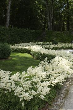/\ /\ . Astilbe in Edith Wharton's garden at The Mount, Lenox, MA