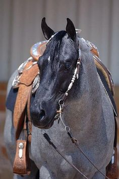 "This is"" My Final Notice""..a Quarter Horse with the Blue Roan colouring, he lives at Riverside Ranch..such a beauty"