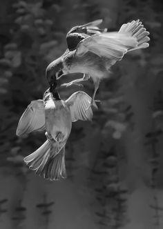 FLYING KISS by Idruz Arsyad