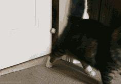 Infinity cat