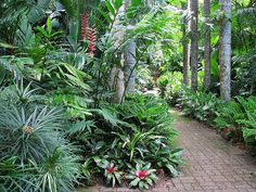 Osmoxylon lineare, Heliconia rostrata, Ginger sp, Calathea zebrina, Broms including Neoregelia. - Cairns Botanic Gardens
