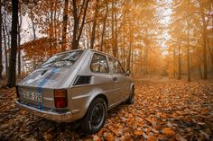 #autumn #car #dawn #environment #fall #forest #landscape #leaves #light #nature #outdoors #road #sunlight #transportation system #travel #trees #vehicle #woods