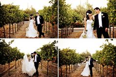 the most adorable couple in a vineyard