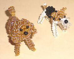le caniche et le fox terrier