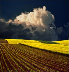 Yellow field by ~jup3nep