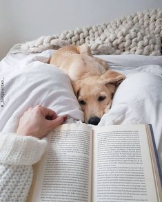 Top 5 Ways To Bond With Your New Dog - Looking for new ways to bond with your dog? Check out these five unexpectedly indulgent ways Vita D - Cute Baby Animals, Animals And Pets, Dog Pictures, Animal Pictures, Cute Dog Photos, Cute Dogs And Puppies, Baby Puppies, Doggies, Dog Photography