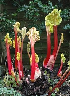 Flowers, Plants, Gardening, Decor, Decoration, Lawn And Garden, Plant, Decorating, Royal Icing Flowers