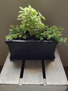 Secrets to a Thriving Indoor Herb up your meals with fresh herbs from your own indoor garden. Plant Wall Diy, Indoor Plant Wall, Indoor Plants, Fenced Vegetable Garden, Herb Garden, Indoor Garden, Garden Tips, Types Of Herbs, Kitchen Herbs