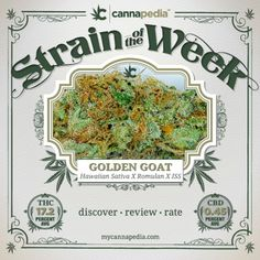 Featured Strain of the Week: #Golden Goat (#Hawaiian #Sativa X #Romulan X #Island #Sweet Skunk)  |  Discover • Review • Rate  #mmj #cannabis #420 #thc #cbd