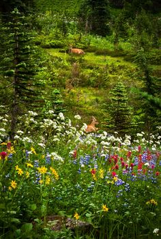 I live in a place like this....minus the flowers...cause the deer eat them all gone!