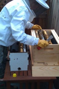 5 Guidelines To Help You Start a Backyard Beehive  --  fresh honey and happy flowers are just two perks of a beehive...