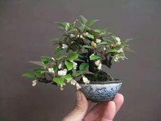 ☺♥I simply love this beautiful #bonsai!♣☺       #BonsaiInspiration