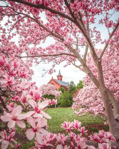 Photos of the Enid A. Haupf Gardens next to the Smithsonian castle including the Moongate Garden and magnolia flowers in bloom. Cherry Blossom Art, Blossom Garden, Magnolia Flower, Blooming Flowers, What A Wonderful World, Four Seasons, Washington Dc, Wonders Of The World, Landscape