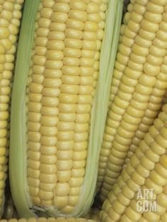 Corn, Northern Extrasweet VarietyBy Wally Eberhart Sweet Corn, Northern Extrasweet Variety Photographic Print by Wally Eberhart at Sweet Corn, Northern Extrasweet Variety Photographic Print by Wally Eberhart at Popcorn Seeds, Smothered Chicken, Enchilada Casserole, Sweet Corn, Chicken Recipes, Alice, Mary, Poster, House