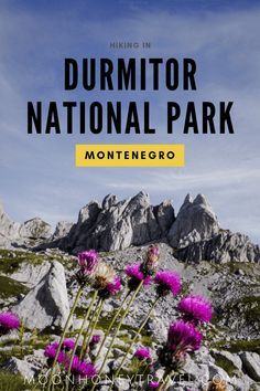 Durmitor National Park is one of the most bewitching places in the Balkans. We've created a comprehensive guide to hiking in Durmitor National Park, Montenegro, which includes: where to hike in Durmitor, where to stay, how to get to the park, waymarking, etc... #montenegro #durmitor #durmitornationalpark #hiking #trekking #dinaricalps #hikingtrails #montenegrotravel #balkans #travel #offthebeatenpath #adventuretravel #outdoortravel