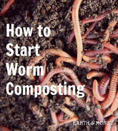 How to Start Worm Composting