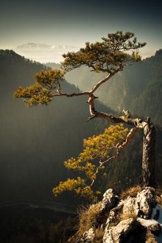 Falcon Cliff by Krzysztof Hubaczek Beautiful Landscape Photography, Beautiful Landscapes, Natural Structures, Bonsai Plants, Tree Silhouette, Environment Concept Art, Beautiful Places To Travel, Small Trees, Belle Photo