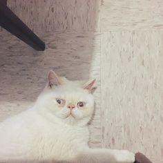 Go away human! #J #行開啲啦人類 #你地愚蠢嘅人類 #機心重的貓 #cat #cats #kitten #neko #pet #exoticshorthair #exoticcat #catstagram #catsofinstagram #instacat #instagramcat #貓 #猫 #喵 @meow #cat_features #小魔怪 #Gremlins #咕嚕 #Gollum #flatface #扁面貓 # #meowbox by @aj_bj_gremlins_cat cat enclosures  cat cats kitty cute catlover catsofinstagram catcam instacat catstagram catsagram lovecats cat product reviews