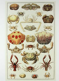 This is soo cool!! I never knew that there were so many different kinds of lobsters and crabs!