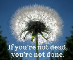 """""""If you're not dead , you're not done""""的图片搜索结果"""