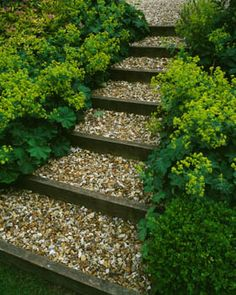 Gravel and Sleeper Steps surrounded by Alchemilla Mollis, Fovant Hut, Wiltshire, photographed by Clive Nichols