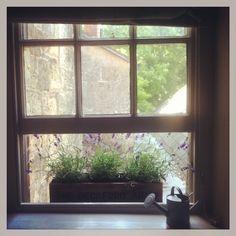 Lavender window box
