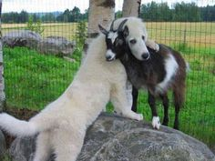 """""""Pure Beings"""" — Uniquely Priceless Hug….❤❤ found on facebook"""