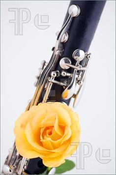 Clarinet and Yellow Rose