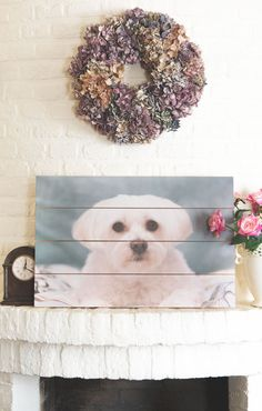 The title makes it already clear, but the picture on wood is my dog, Nikkie. I've doubted if I would choose a holiday picture or one of my favorite photography pictures, but my dog is very special to me, my best friend and I see her as my 'service dog.'