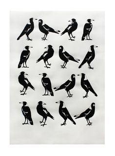 """a group of Magpies is called a Tiding of Magpies, also several other names including a """"Murder"""" as they are also corvidae (like crows)"""