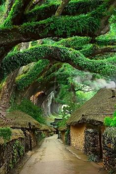 Beautiful Places To Travel, Cool Places To Visit, Beautiful World, Beautiful Gardens, Places To Go, Nature Pictures, Cool Pictures, Unique Trees, Belle Photo