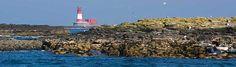 De Farne-eilanden – Vogels spotten en duiken met zeehonden
